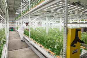 McMurray Stern Mobile Storage Solutions for Cannabis Growers Featured in New York Post